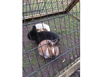 7 baby rabbits need good homes