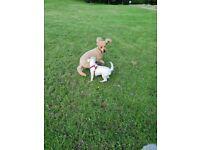 Dog walker/pet sitter (Brislington)