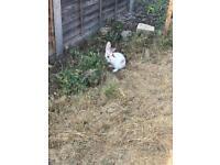 Little fluffy bunny rabbits