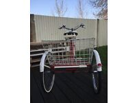 Vintage pashley adult tricycle