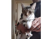 2 4 month old female kittens (ready to be spayed) looking for a home together