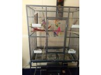 Two cockaiels with very large cage £100