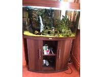 Juwel vision, fully stocked aquarium