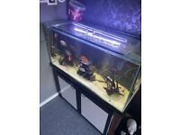 4ft Fish tank 350L