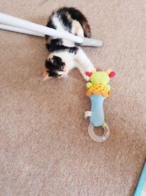 lovley kitten