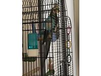 Cockatail