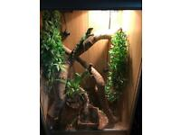 2 water dragons and viv
