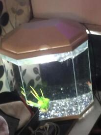 Gold fish and tank with filter stoned and ornaments