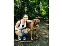 Dog Walking /Pet Sitting / Dog Walker / Pet Sitter