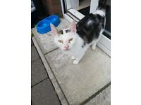 YOUNG FEMALE CAT (STRAY)