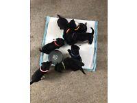 Yorkie cross Puppies