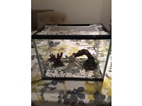 Small fish tank with pump and accessories