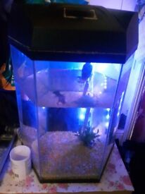 Good size tank with heater led light and 2 fish
