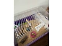 Hamster cage for sale.