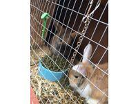 Rabbits 18 Weeks Old Sisters Babies