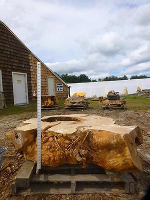 Big Leaf Maple Thick Burl Wood Slab Chunk Natural Live Edge Table Base 3492x1 Leaf Table Base