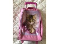 Child's small kitten suitcase