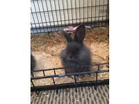 Girl Blue Rabbit