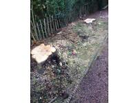 Stumpblasters - tree stump & root removal