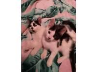 2 beautiful boy kittens
