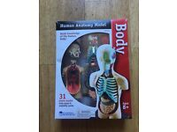 Human Anatomy Model - brand new in box