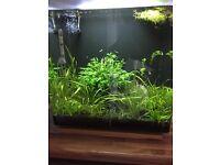 Fish tank Aqua nano40