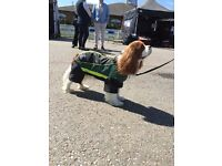 Quality Dog Coats & Accessories for sale