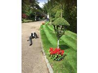 Gpf landscapes Ltd /tree surgery covering Berkshire