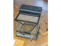"Vivarium- Clear glass sides. Measures 18""x 18"" x 18"" ( L x W x H )."