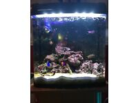 Kent Bio Reef Marine Aquarium - Full Set up