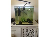 55ltr fish tank