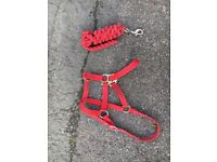Head collars and lead ropes