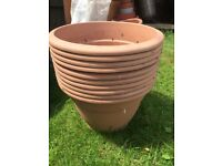 PLENTY OF PLANTS POTS OF DIFFERENT SIZES AVAILABLE