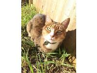 Cat needs to be re homed