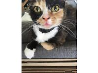 2Cats for loving home