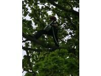 Tree surgeon and landscaping