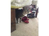 FREE cat to a good home ** read description***