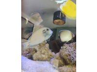 Marine fish tank 6ft joblot