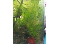tropical plants for the fish tank