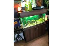 Large fish tank Manchester