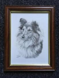 Framed Black And White Print of a Shetland Sheepdog - Sheltie by Mike Sibley, 2007