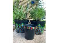 Red spotted plant pots