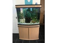 200 litre fish tank with cabinet and all equipment