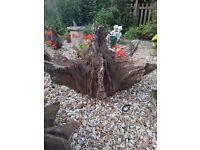 Oak roots garden features