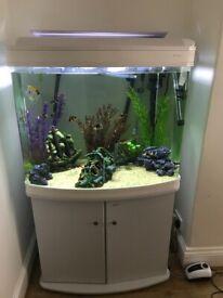 Tropical fish full set up