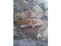 Beginners Shore Sea Fishing For Sale Torbay South Hams £15