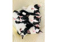 7 Adorable kittens for sale