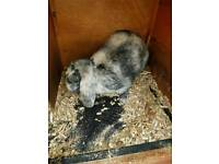 Mixture of rabbits available