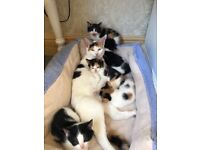 5 Kittens for sale 11 weeks old ready now