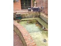 Pond Cleaning, Maintenance, Repair, Construction and More... With 'Fish Pond Perfect'